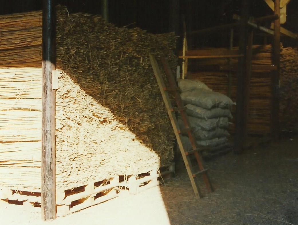 Rohrholz - Trocknung und Reifung